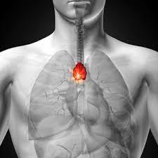 A Thymus-terápia és a rák