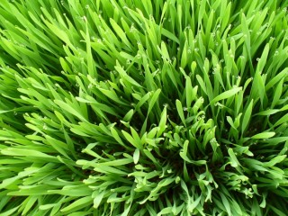 Növekedést stimuláló faktor és teljes értékű táplálék