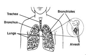 Nem kissejtes tüdőrák