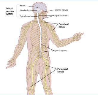 Agyi vagy gerincvelő daganat