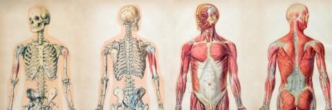 A csodálatos emberi test kvíz