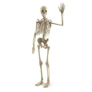 Egy felnőtt embernek hány kiló a csontváza