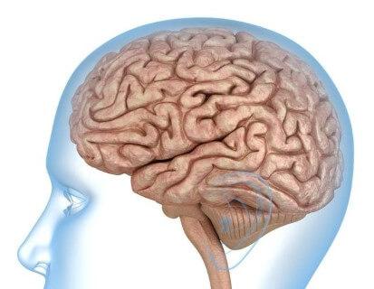 Mekkora egy átlag ember agytérfogata