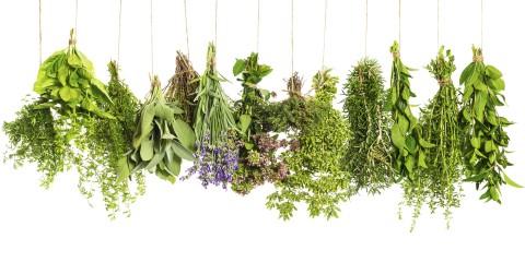 Rákellenes növények kvíz