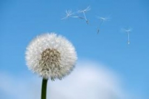 pollen allergia