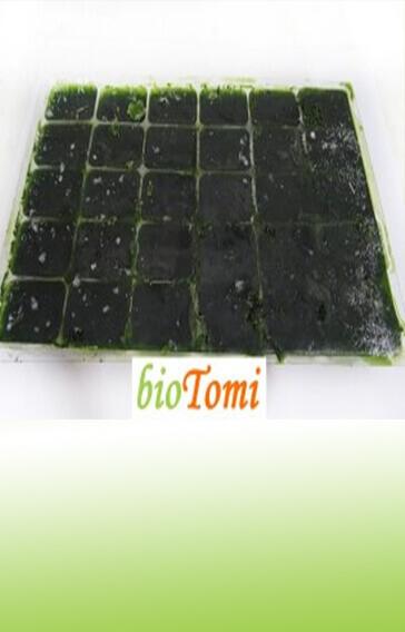 bioTomi búzafűlé vegyszermentes